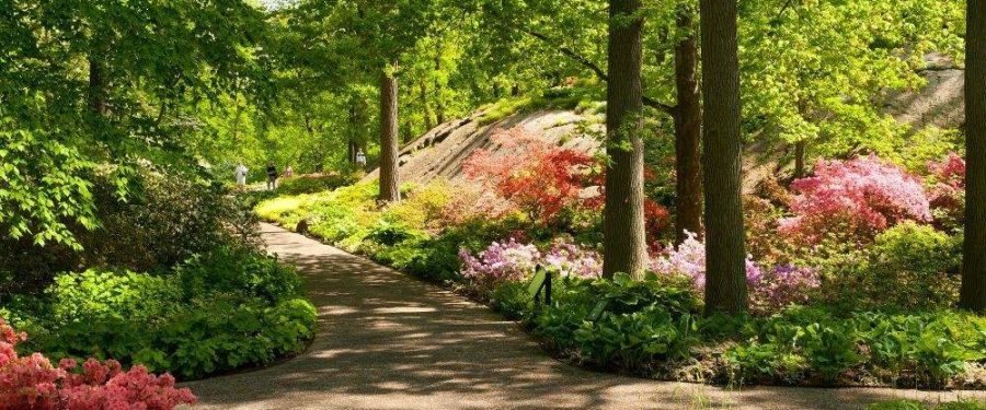 New York City Is Hotspot For Nature