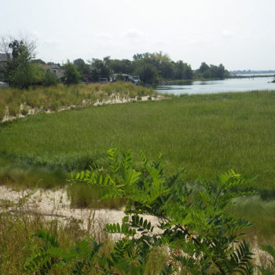 Ancient Salt Marsh In  Bronx Reveals Dangerous Flooding Likely For NYC