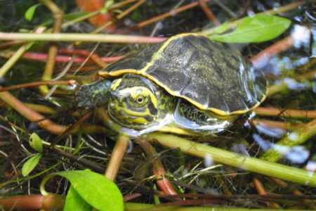 Extremely Rare Turtle Species Hatched At Bronx Zoo