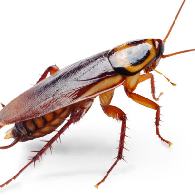 The Bronx Zoo Wants Lovers To Buy Roaches For Valentine's Day