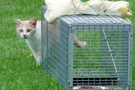 You Can Help Your Neighborhood Cats