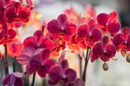 The Orchid Show: Thailand In Bronx