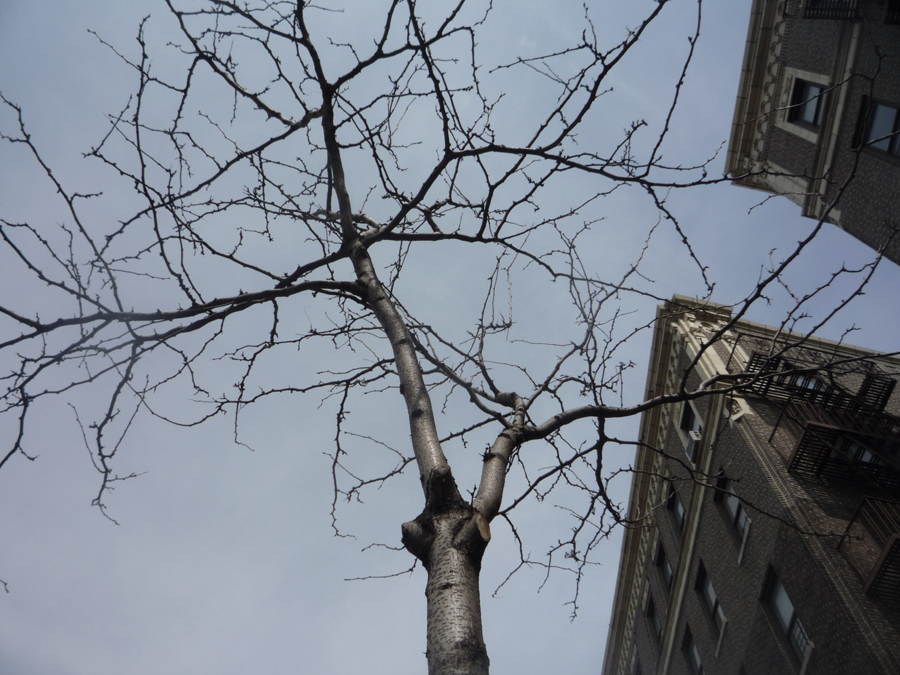 Grand Concourse Trees Talking?
