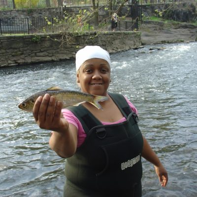 Alewife Return To The Bronx River