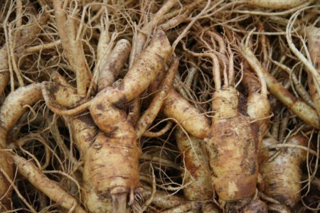 American Ginseng Helps Cancer-Related Fatigue