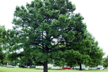 Bronx Anti-Tree Sentiments Rising
