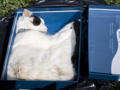 Bronx Vet Arrested For Disposing Of Pets