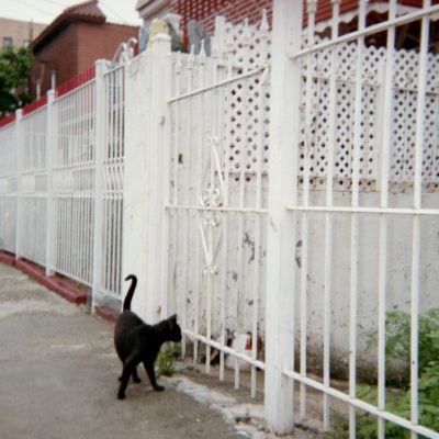 A Cat Killer Lives In The Bronx