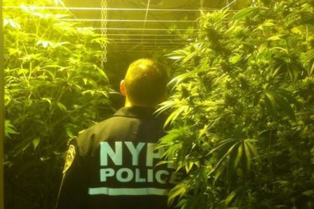 Marijuana Farm In Bronx Building