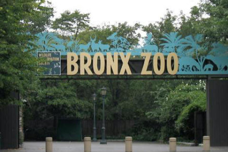 Bronx Zoo, Wildlife Conservation Society
