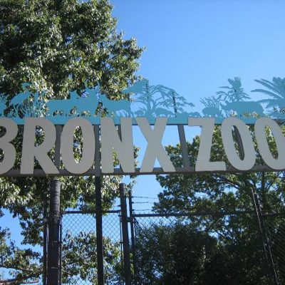 Bronx Zoo Celebrates 110th Birthday