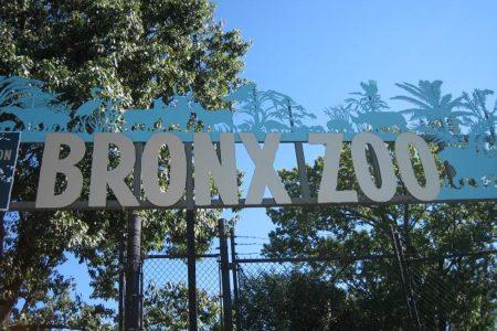 Bronx Zoo Celebrates 110th Birthday