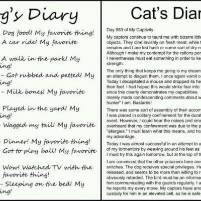 Dog's vs. Cat's Diary