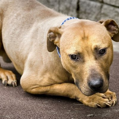 Bronx Dogfighting Trial Date Is Set