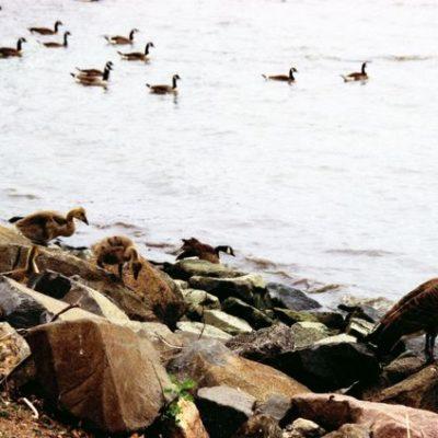 Response To FHJC Lawsuit Against Edgwater Park