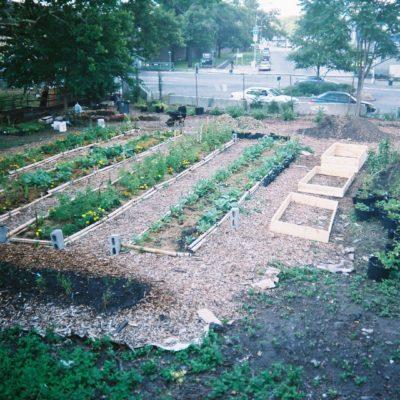 A South Bronx Sustainable Urban Farm