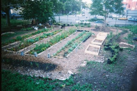 A South Bronx Sustainable Urban Farm