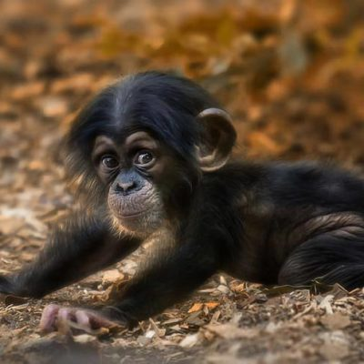 Animal Planet Gives A Behind-the-Scenes Look At The Bronx Zoo