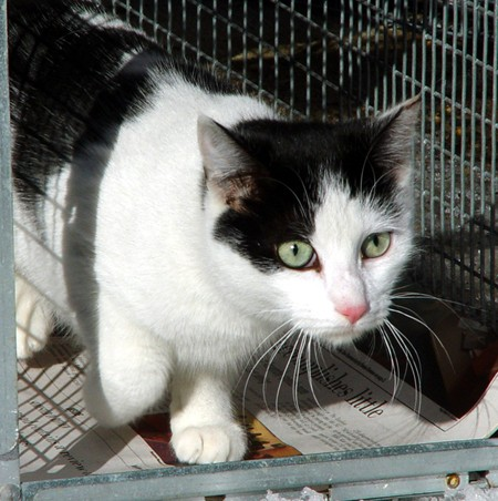 You Can Help Your Neighborhood Cats