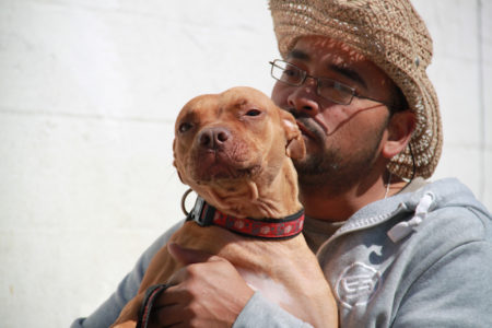 No-Kill Bronx Animal Shelter At Risk Of Closing