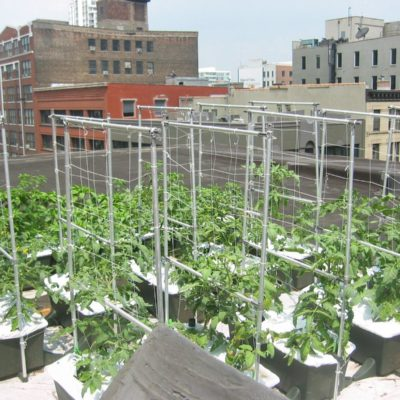 Bronx Video On Urban Agriculture