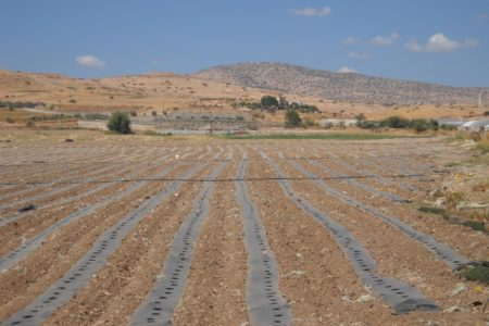 Help Palestinian Farmers Grow & Export Their Crops