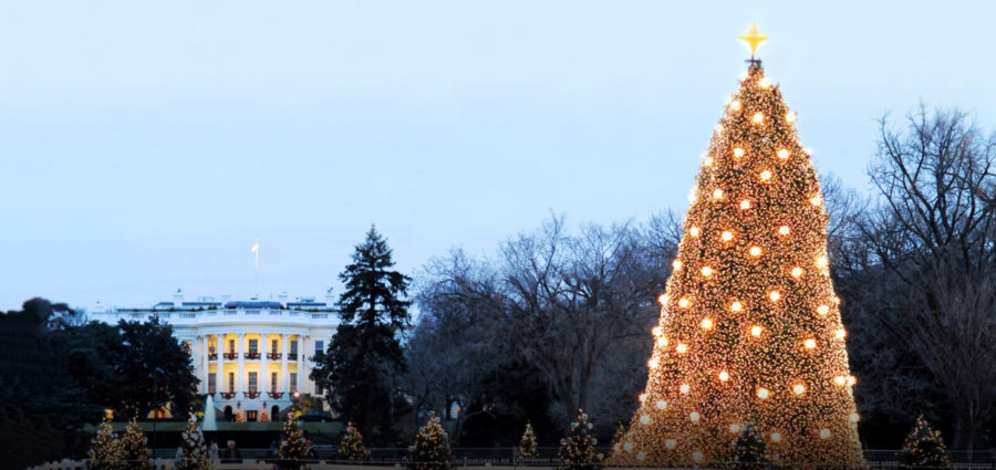 National Christmas Tree 2019.97th National Christmas Tree Lighting The Bronx Daily