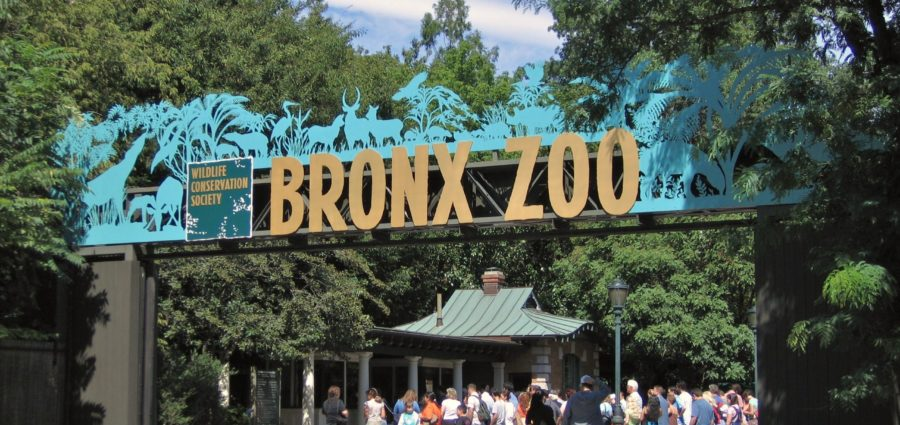 The Bronx Daily | Bronx.com