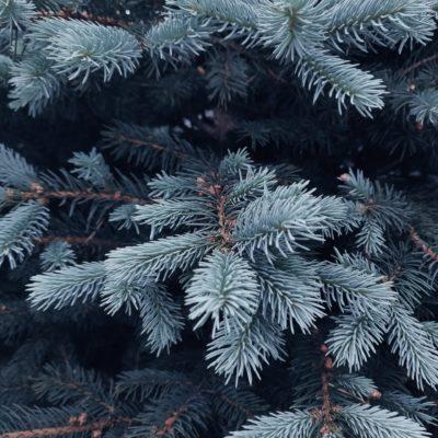 Annual Bronx Christmas Tree Lighting