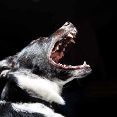 Indictment Of Four Organizers Of A Bronx Dogfighting Ring