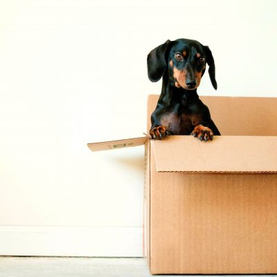 Your Tips To The Big Move