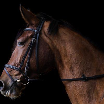 First Female Jockey Wins The 2021 Darwin Cup